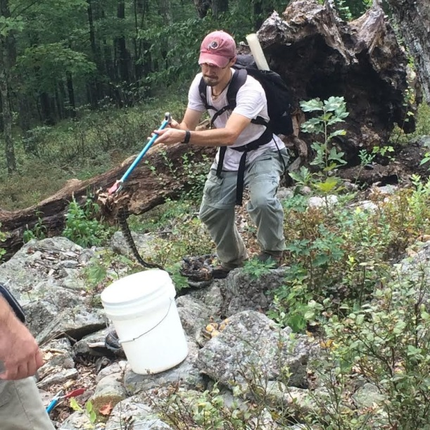 Field work in action! Me capturing a small timber rattlesnake. (Photo by T. Langkilde)
