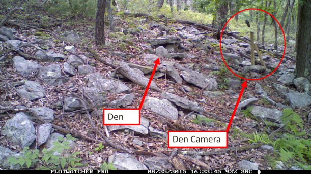 Camera positioned directly in front of rattlesnake den.